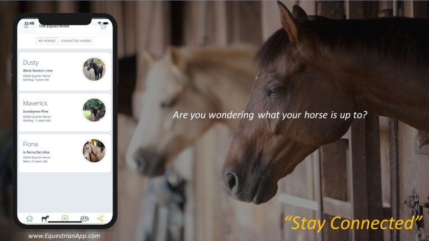 Wonderingwhatyourhorseisupto